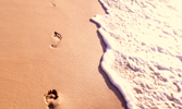 "Search for ""Footprints"" in Life Stories"
