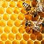 The Wisdom of Prophetic Medicine: Honey