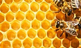 The Wisdom of Prophetic Medicine: Honey